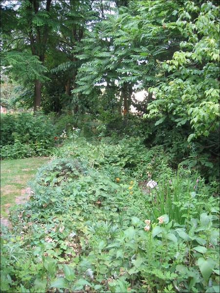 peat/woodland garden (Garden Harrie en Ton de Vries, Valkenswaard)
