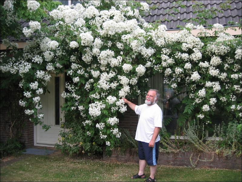 """front garden with Harrie and Rosa filipes """"Kiftsgate"""" (Garden Harrie en Ton de Vries, Valkenswaard)"""