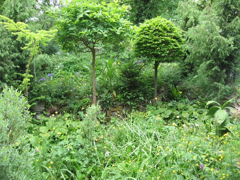 habitat Cypripediums (Garden, Henk van de Bogaart)