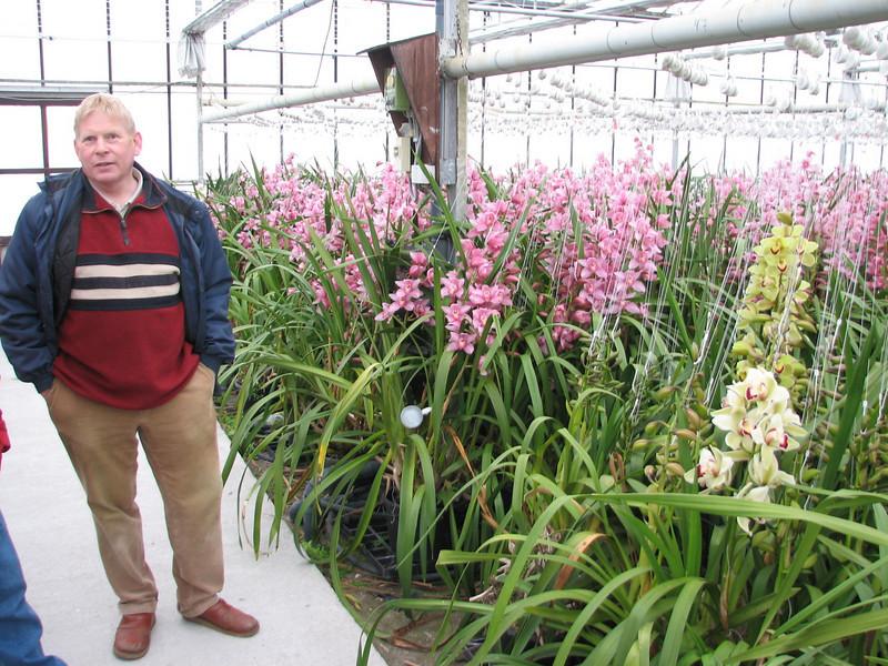 Sjaak de Groot ( Cymbidium nursery, Sjaak de Groot, De Zilk, Southern Holland)