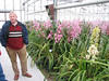 Sjaak de Groot ( Cymbidium nursery, Sjaak de Groot, De Zilk, Southern Holland)