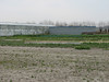 bulbous plants nursery, Sjaak de Groot,  (De Zilk, Southern Holland)
