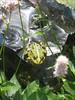 frog (Pondgarden Ada Hofman, Loozen)
