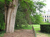 trunk of Taxodium distichum (house Verwolde, Achterhoek)