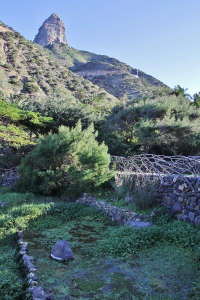 Wet area, Jardin Botanico del Descubrimiento, Argaga with Roque El Cano, N of Vallehermoso