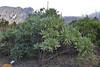 Echium webbii, Centro de visitantes, Nacional Parque Caldera Taburiente, LP3