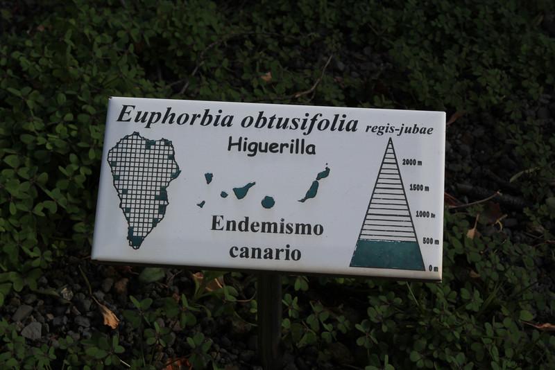 Euphorbia obtusifolia, Centro de visitantes, Nacional Parque Caldera Taburiente, LP3