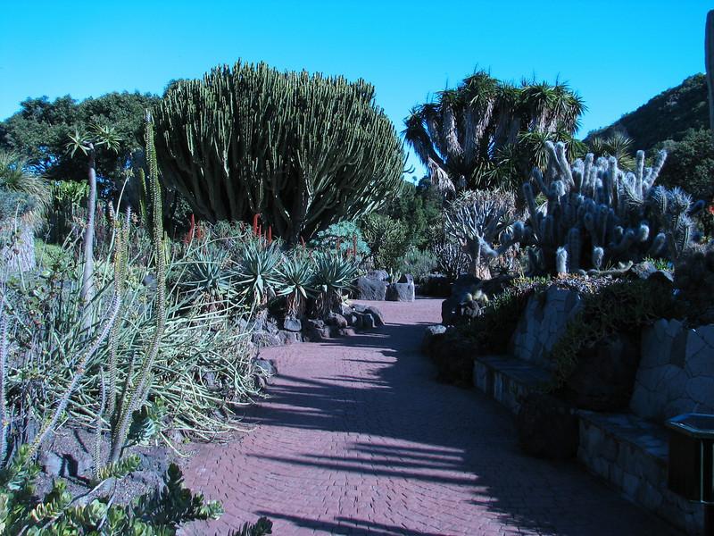 Jardin Canaria (suculents)
