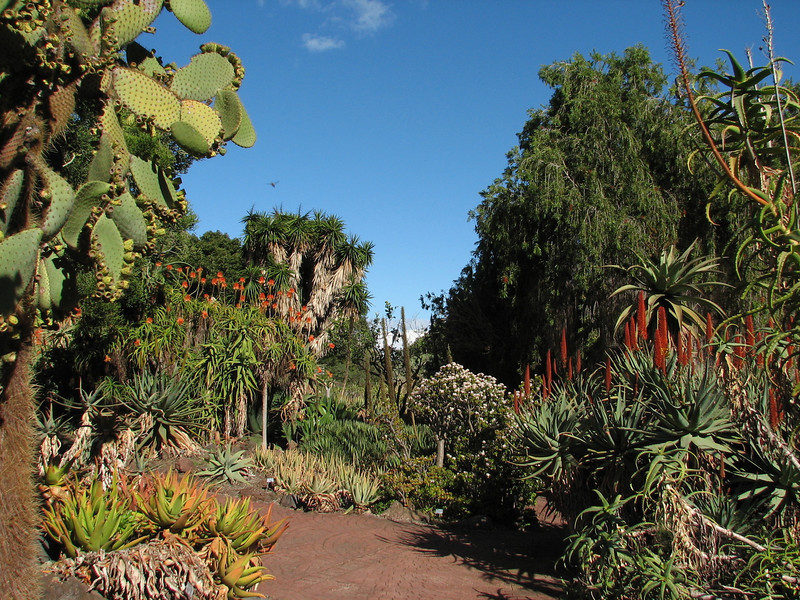 Aloe garden (Jardin Canaria)