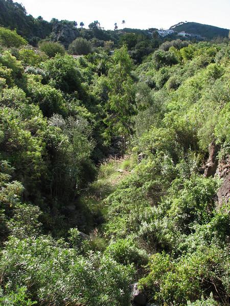 """the Garden is a natural """"Barranco"""" (Jardin Canaria)"""
