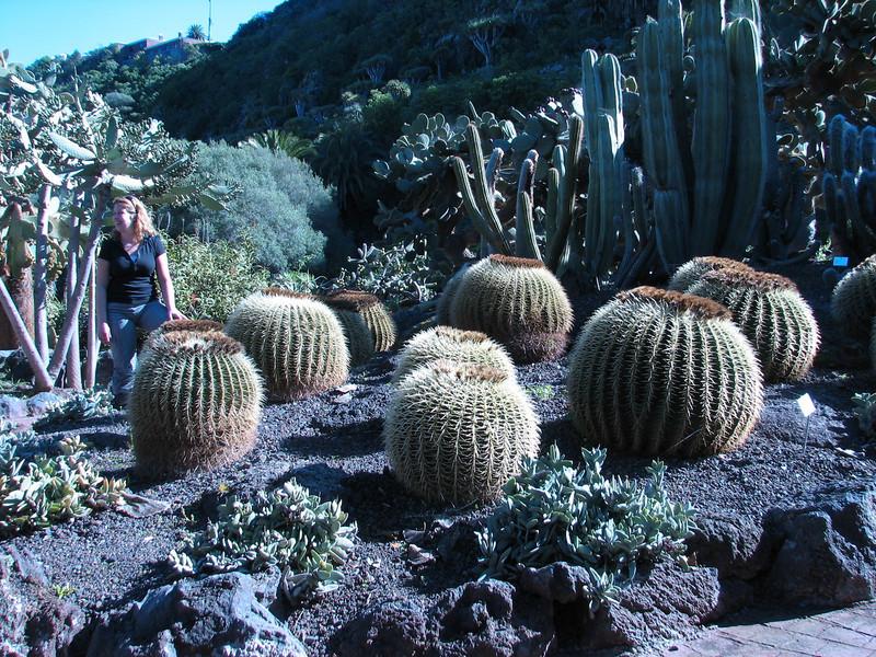 Echinocactus spec. (Jardin Canaria, near Las Palmas)