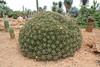 Garden Botanicactus, E of Ses Salines