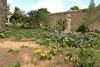 Sternbergia lutea, Monastery, Puig de Randa 542m, NE of Llucmajor