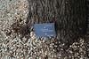 Quercus macrocarpa, native to N. America, Gardi Botanice de Sóller,