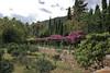 Jardines de Alfabia