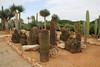Ferrocactus stainesii, native to Mexico, Garden Botanicactus, E of Ses Salines