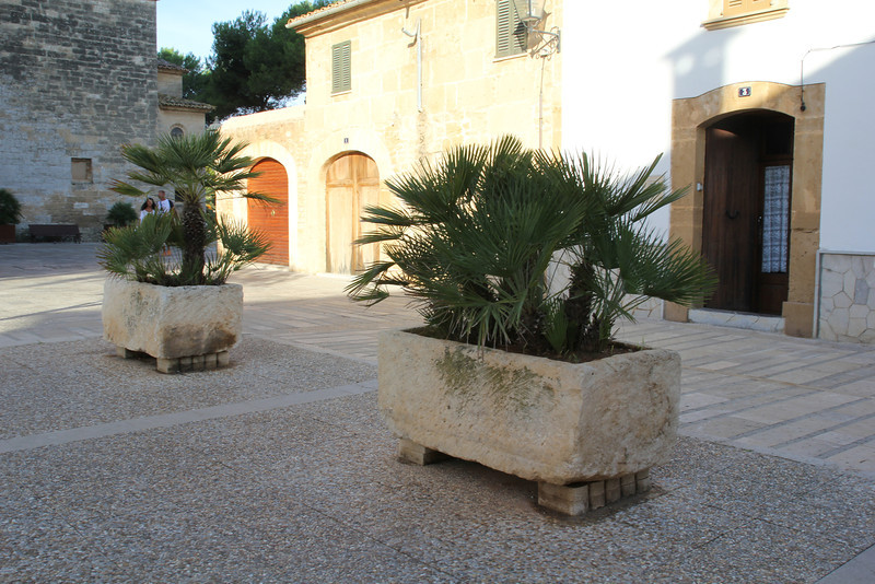 Chamaerops humilis, Troughs of rock, Church of Port d'Alcúdia. <br /> For more pictures of cultural interest see gallery TRIPS on this site.