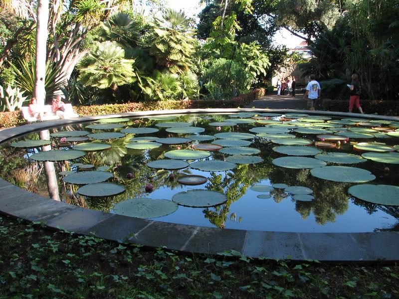 Pond with Victoria amazonica (Puerto de La Cruz,Tenerife)