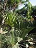 Botanical Garden (Puerto de La Cruz,Tenerife)