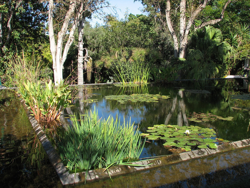 Pond (Puerto de La Cruz,Tenerife)