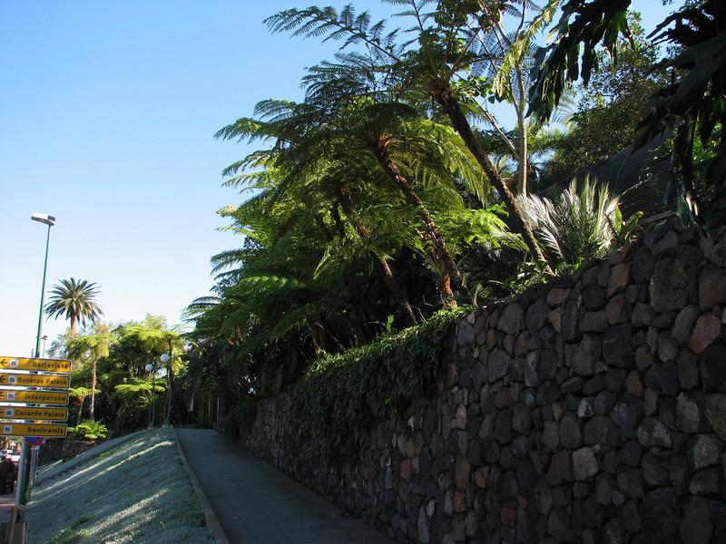 Gardenwall with treeferns, Sphaeropteris cooperi (Puerto de La Cruz,Tenerife)