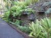 Ferns (Puerto de La Cruz,Tenerife)