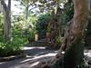 Botanic Garden (Puerto de La Cruz,Tenerife)