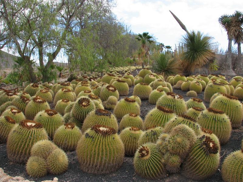 Parque Exoticos Amazonica (Parque Exoticos Amazonica, Los Americanos, South Tenerife)