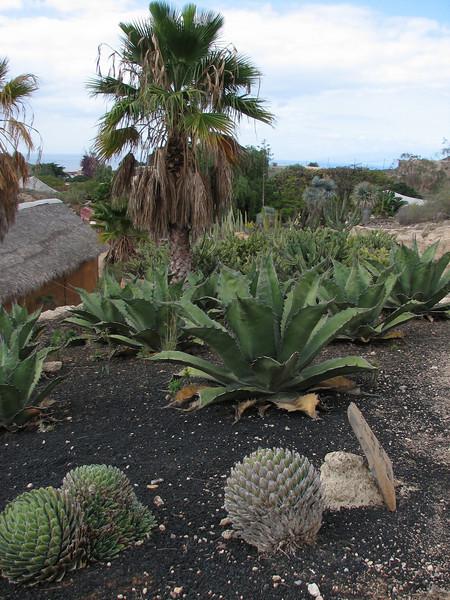 Parque Exoticos Amazonica (Los Americanos, South Tenerife)