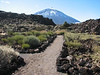 Botanical Garden, Parque Nacional Del Teide (Tenerife)