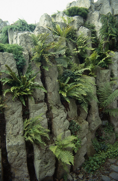 the first ferns grows in the wall near the entrance (construction rock garden 1991)