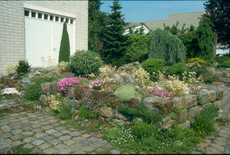 raised bed after five years ( construction rockgarden 1992)
