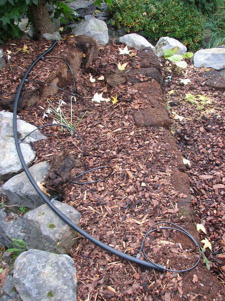 hose of the irrigation system (creation peat/woodland garden 2007)