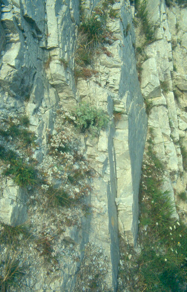 example of gun-whaled rock slabs (Savoie France)