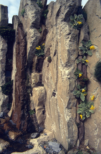 the first plants grows in the crevices (construction rock garden 1991)