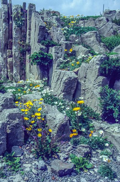 Garden, 1996