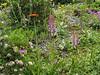 Roof garden, June 2005