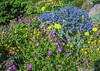 Roof garden June 2006