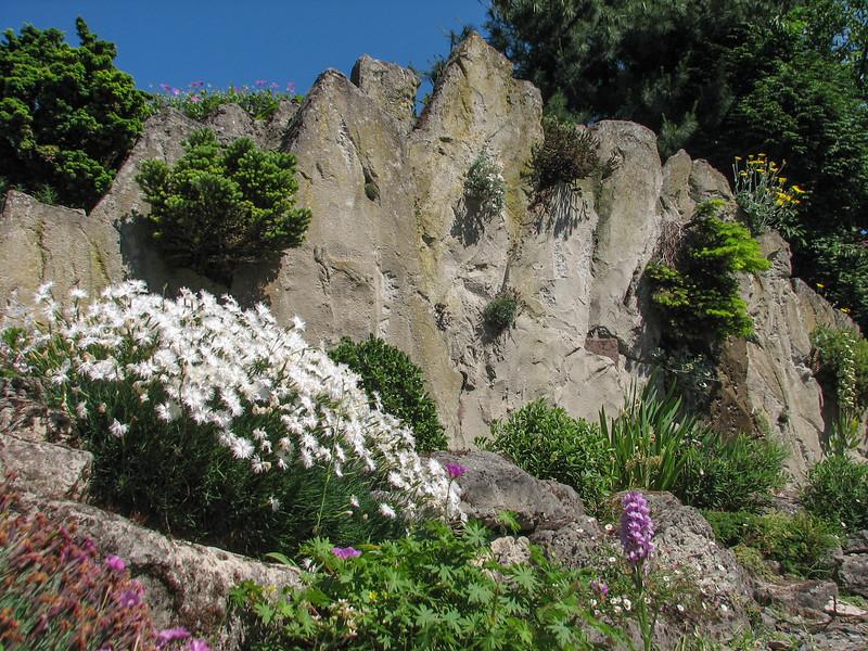 Rock-garden, 2009