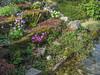 Garden, 2010