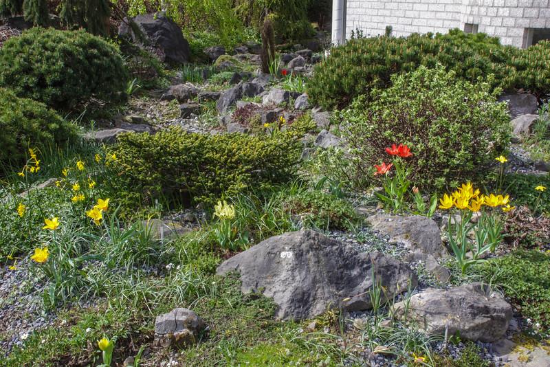 Front garden, 2014