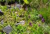 Orchid-seedlings