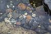 toads fish