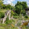 Ferula communis, giant fennel sawing everywere in the garden