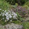 plants between hypertufa rocks