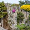 "Abies koreana 'aurea select', Phlox subalata ""mac daniels cushion"" ,Primula auricula and Genista hispanica"
