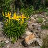 Lilium spec