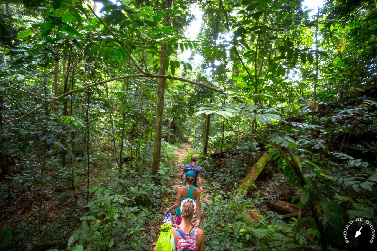 Hiking through the jungle on Ngeruktabel, Palau