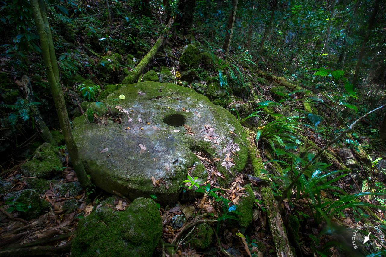 Yapese stone money, abandoned in the jungle