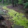 """magic path""  - mossy path through woods"